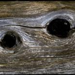 תמונות מס סידורי [ nid ]  משוייכות ל